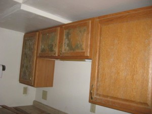 Mold Inspection in Ankeny, IA